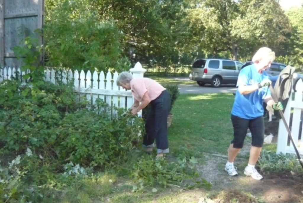 Grosvenor Lodge Gardens - Diana and a Helping Hand member hard at work