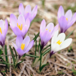 simple strategies to reset for spring